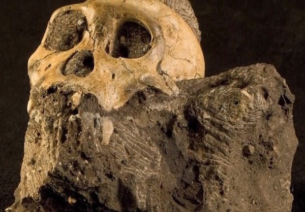 Hominid Ancestors