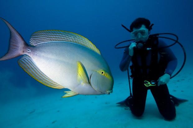 The Surgeonfish