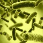 Top Ten Most Dangerous Bacteria on Earth